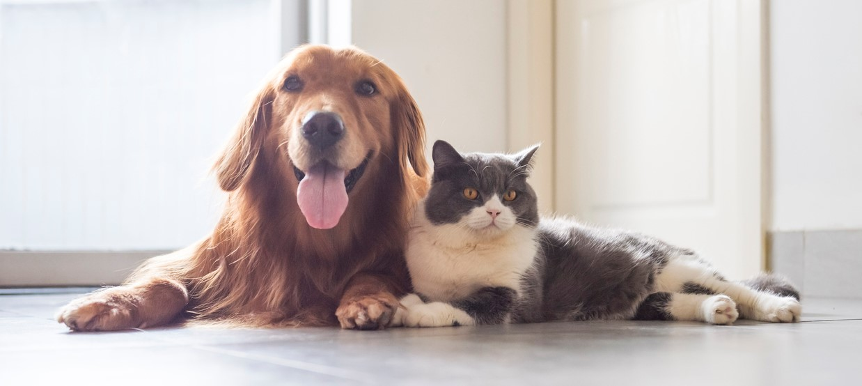 Best Tips on How to Take Care of Your Pets